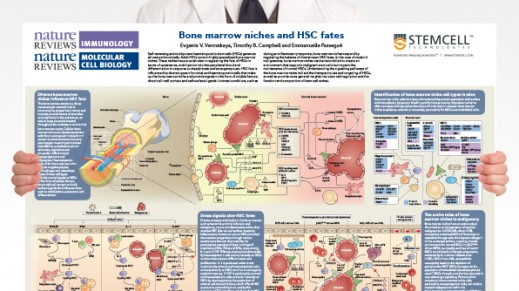 Bone Marrow Niches and HSC Fates