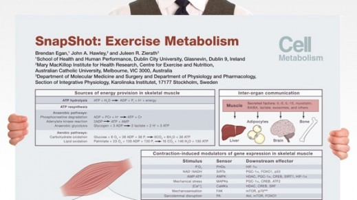 SnapShot: Exercise Metabolism