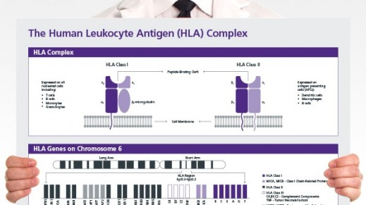 The Human Leukocyte Antigen (HLA) Complex