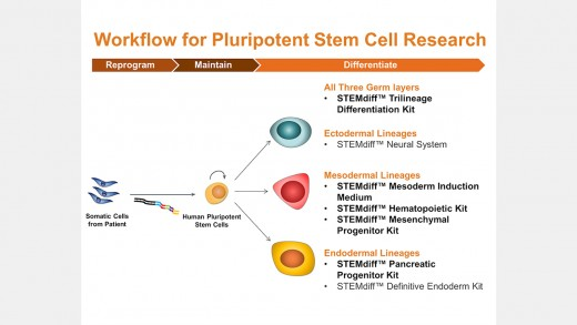 STEMdiff™ Kits for Robust and Efficient Differentiation of hPSCs to Multiple Cell Types