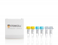 STEMscript™ cDNA Synthesis Kits