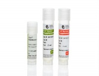 iCell® GlutaNeurons Kit, 01279