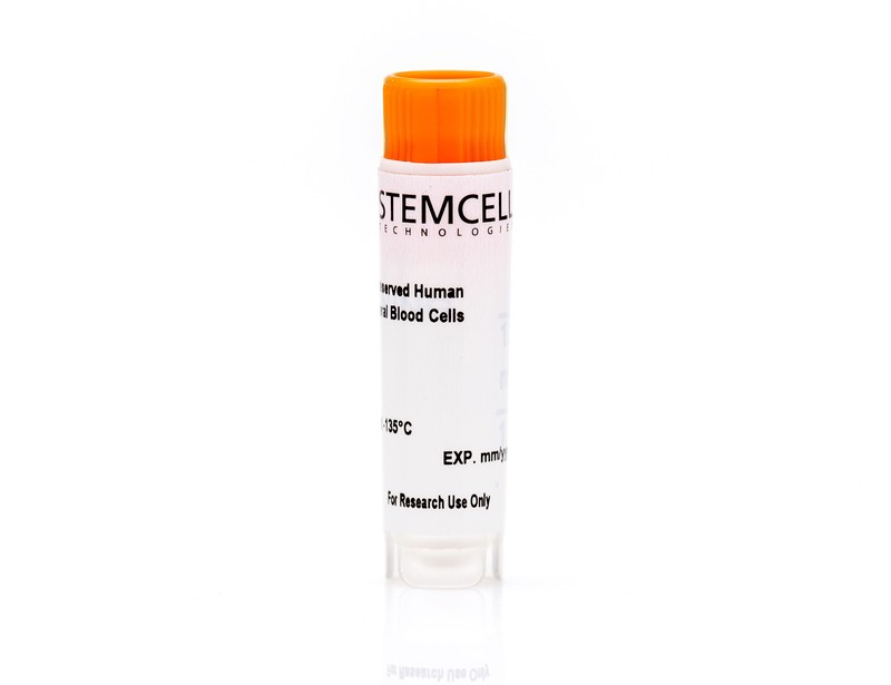 Human Peripheral Blood CD19+ B Cells, Frozen