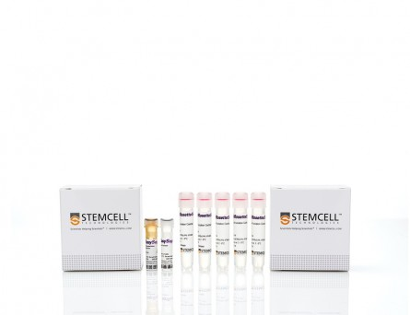 Complete Kit for CD4+CD127lowCD25+ Regulatory T Cells