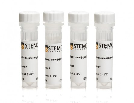 STEMdiff™ Human Neural Progenitor Antibody Panel