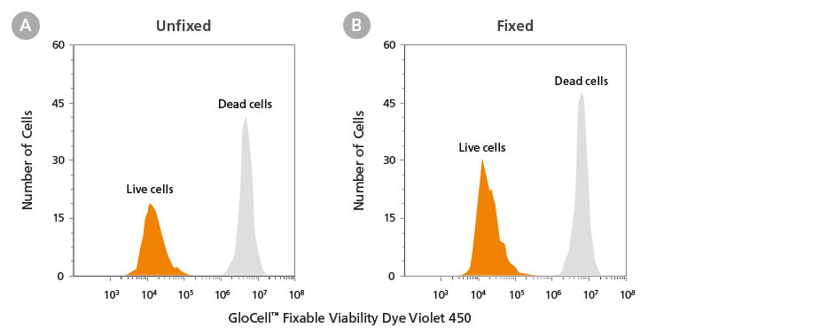 Dead Cells Labeled with GloCell Fixable Viability Dyes Retain Fluorescence Signals Even After Fixation