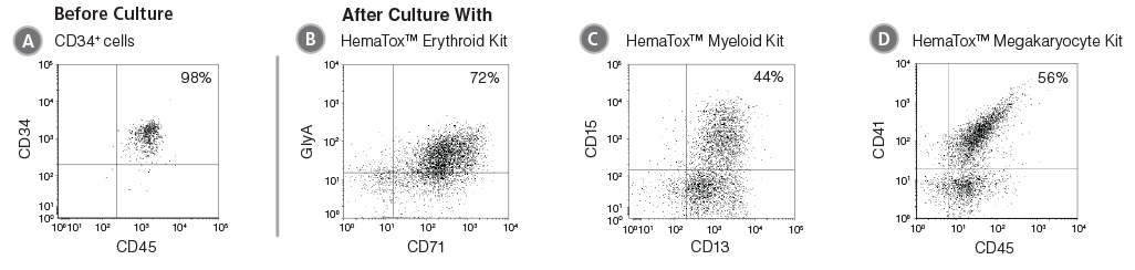 Flow Cytometry Plots Showing Cells Produced After Culture of CD34+ HSPCs with HemaTox™ Erythroid, Myeloid and Megakaryocyte Kits