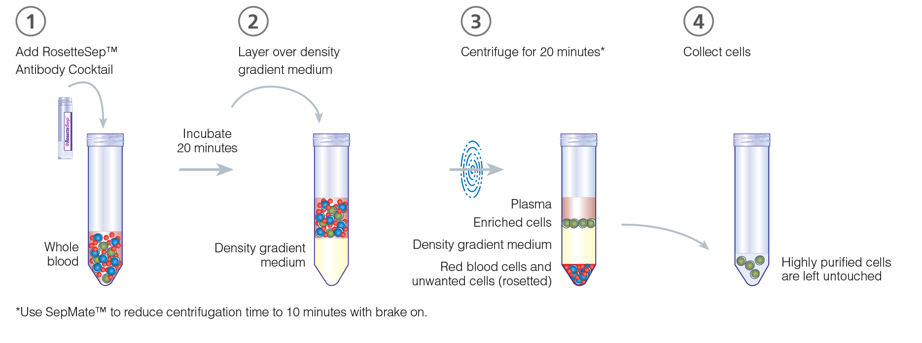 Rosettesep Immunodensity Cell Isolation And Cell Separation