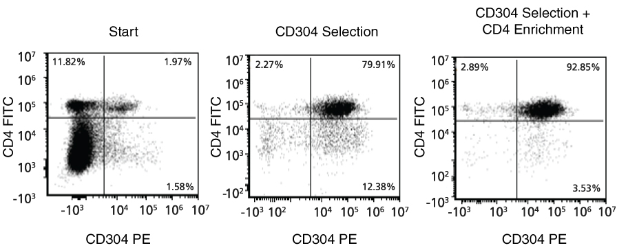 Isolation of Mouse CD4+CD304+ Cells.