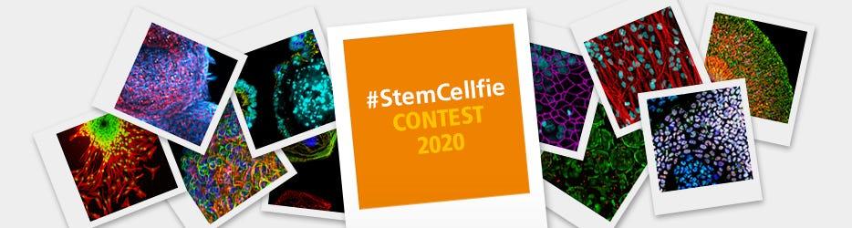 Stem Cellfie