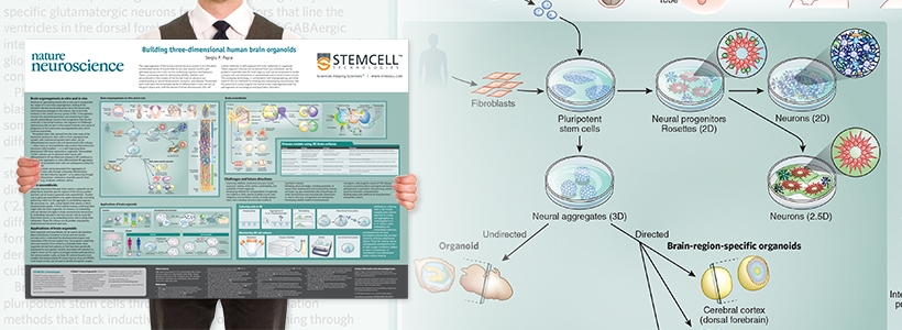 Wallchart: Building Three-Dimensional Human Brain Organoids