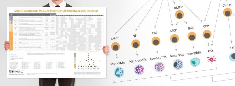 Wallchart: Human Immune Cytokines Infographic Poster