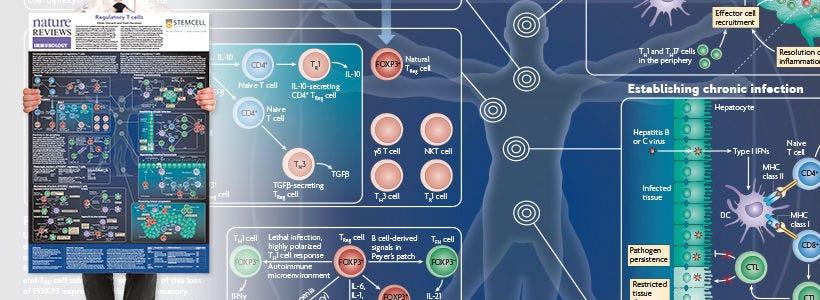 wallchart request regulatory t cells