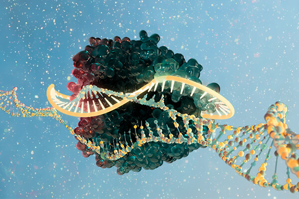 Image of a Cas9 protein and guide RNA complex attached to an unwound DNA molecule.