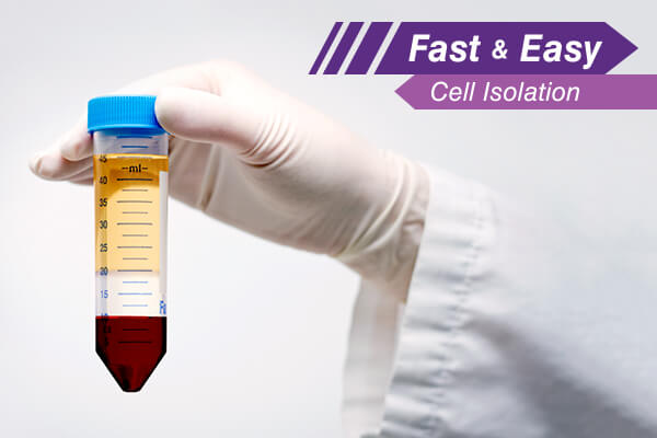 Enrich ILC2 from Whole Blood with RosetteSep. Learn More!