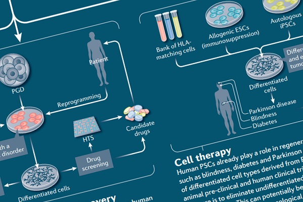A wallchart outlining the derivation and applications of human pluripotent stem cells (hPSCs).