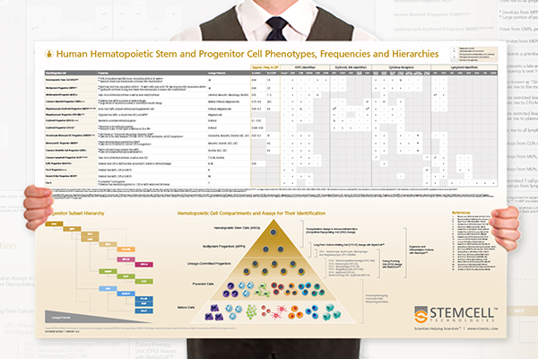 Request a free wallchart on human hematopoietic stem and progenitor cell phenotyping.