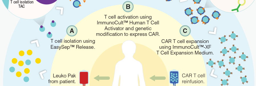T cell separation, activation and expansion reagents