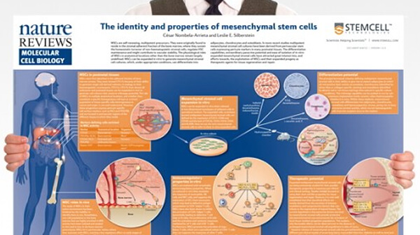 The Identity and Properties of MSCs