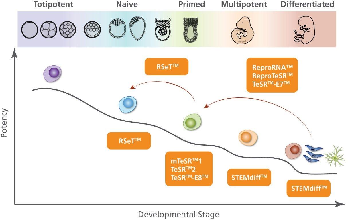 rset human pluripotent stem cells