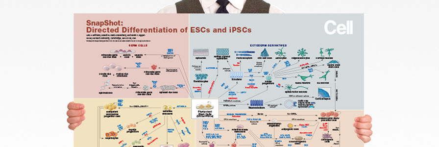 Wallchart: Directed Differentiation of ESCs and iPSCs