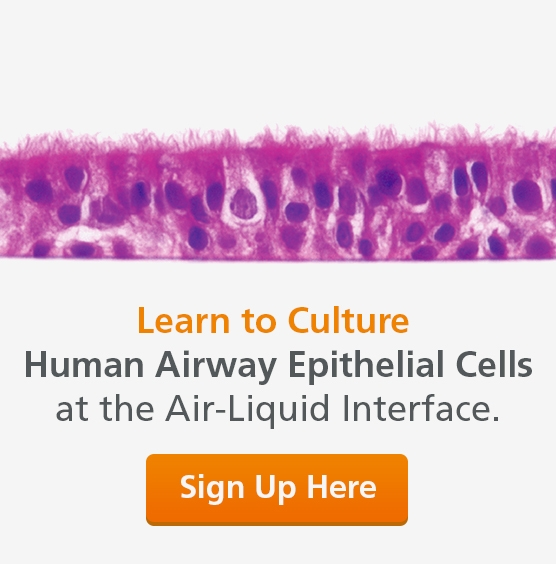 Learn to Culture Human Airway Epithelial Cells at the Air-Liquid Interface. Training Course on Nov 1 - 2, 2018.