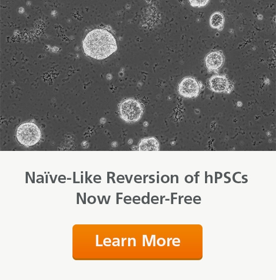 hPSCs Reverted to a Naïve-Like State in RSeT™ Feeder-Free