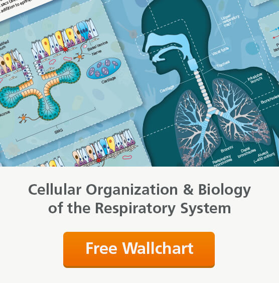 An informative, visually-compelling wallchart detailing the organization and biology of the respiratory system. Request your copy.