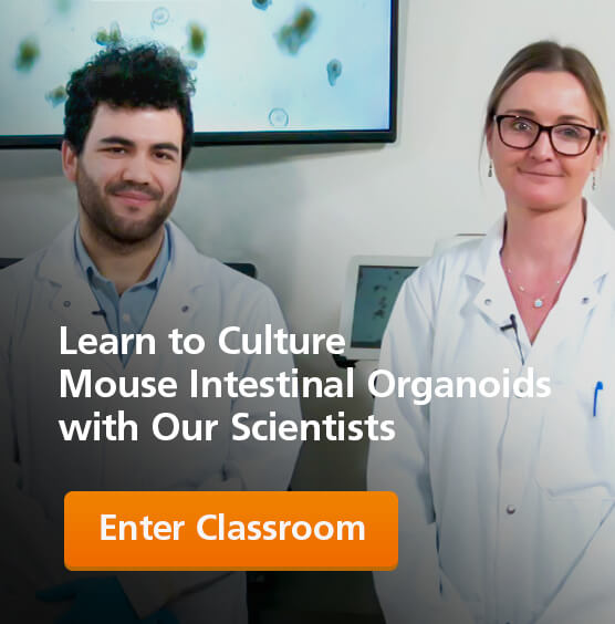 Learn to Culture Mouse Intestinal Organoids with Our Scientists.