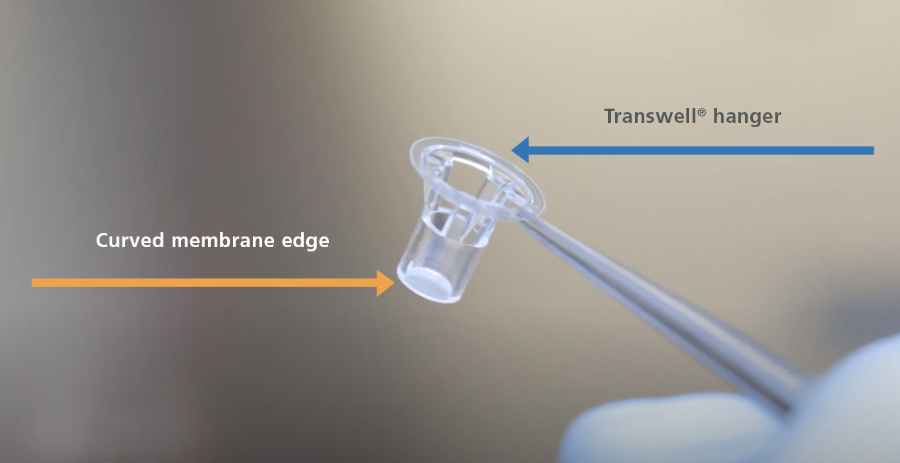 Image showing the hanger and curved membrane edge in a Transwell® Insert