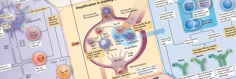 Immune Response to HIV Wallchart