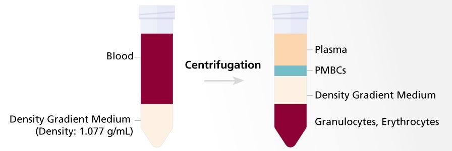 PBMC isolation using density gradient centrifugation