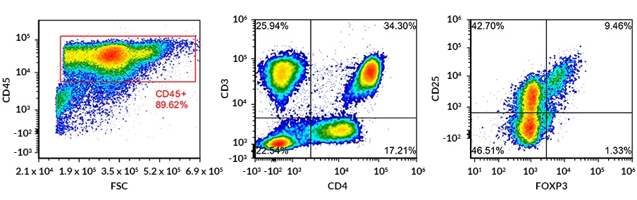Immunophenotyping by flow cytometric marker analysis: multicolour FACS dot plots of human regulatory T cells
