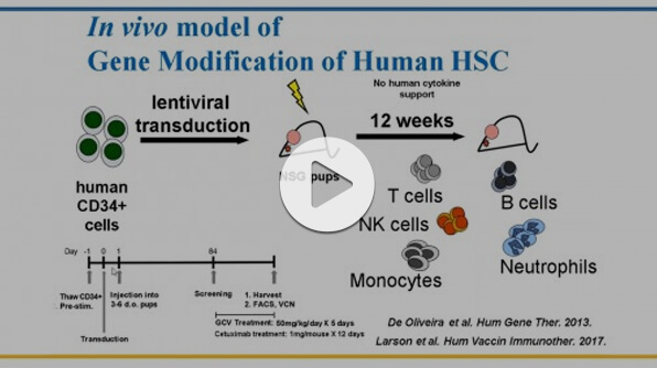Humanized Mouse Models for Hematopoietic Stem Cell Research: Principles and Pitfalls