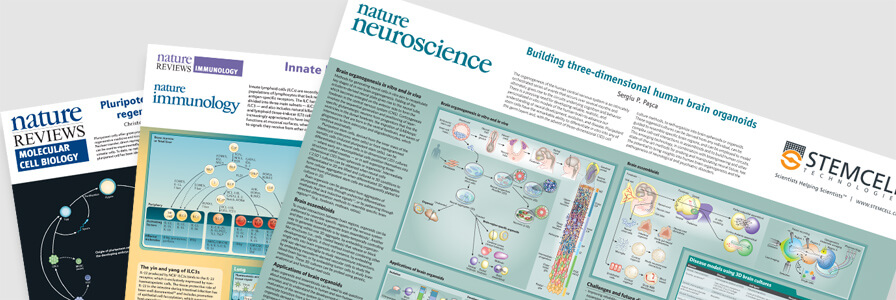 Scientific wallcharts from STEMCELL Technologies